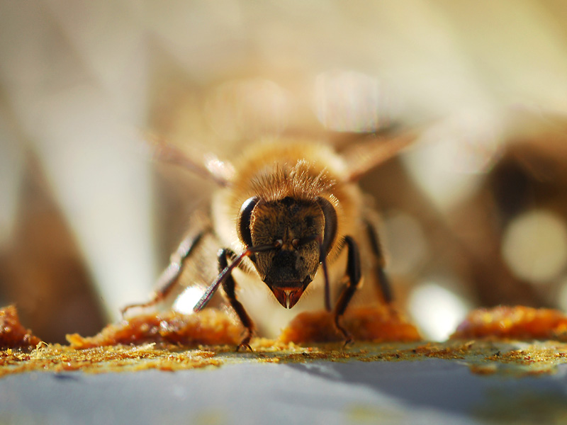 11 Bee Facts That Will Have You Buzzing