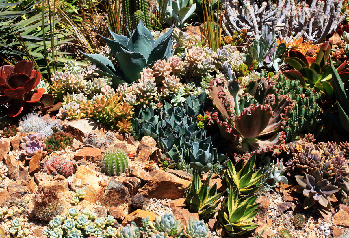 The succulent garden at Mark Anthony Ramirez's home.
