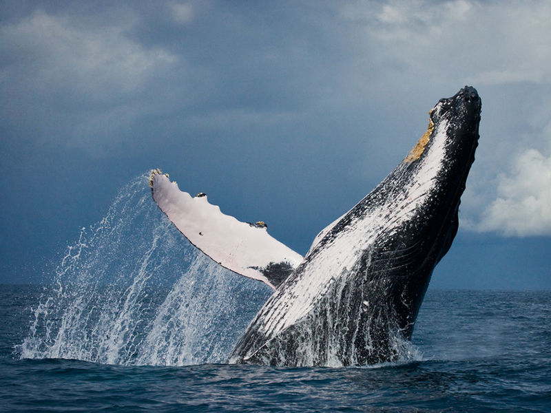 Whale Poop and Walrus Tusks: How Creatures Shape the Seas