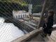 Elwha Dam Removal Brings Hope To Northwest Salmon