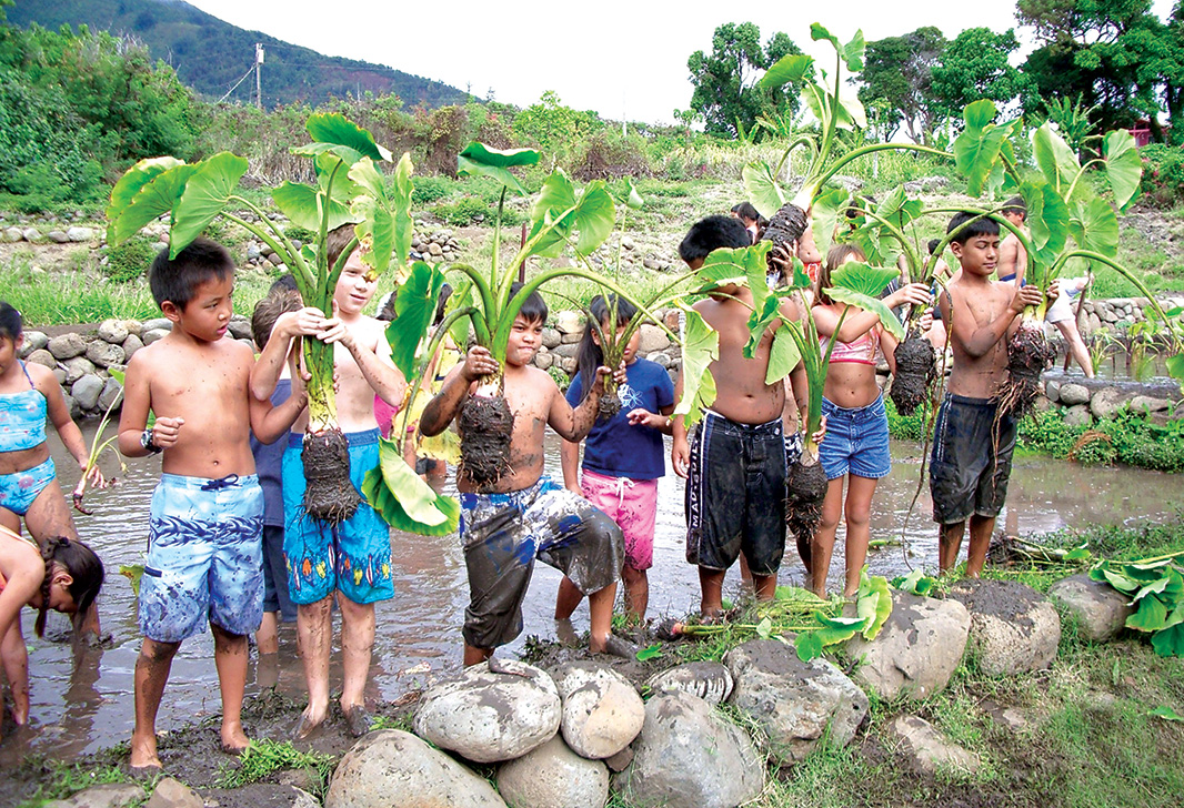 learn the significance of kalo (taro) to the Native Hawaiian culture at a family farm on Maui.