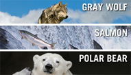 Wolf, Salmon, Polar Bear.