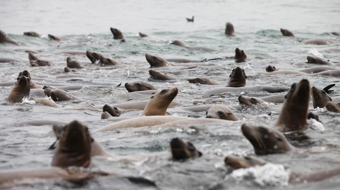 Sea lions in Monterey Bay.