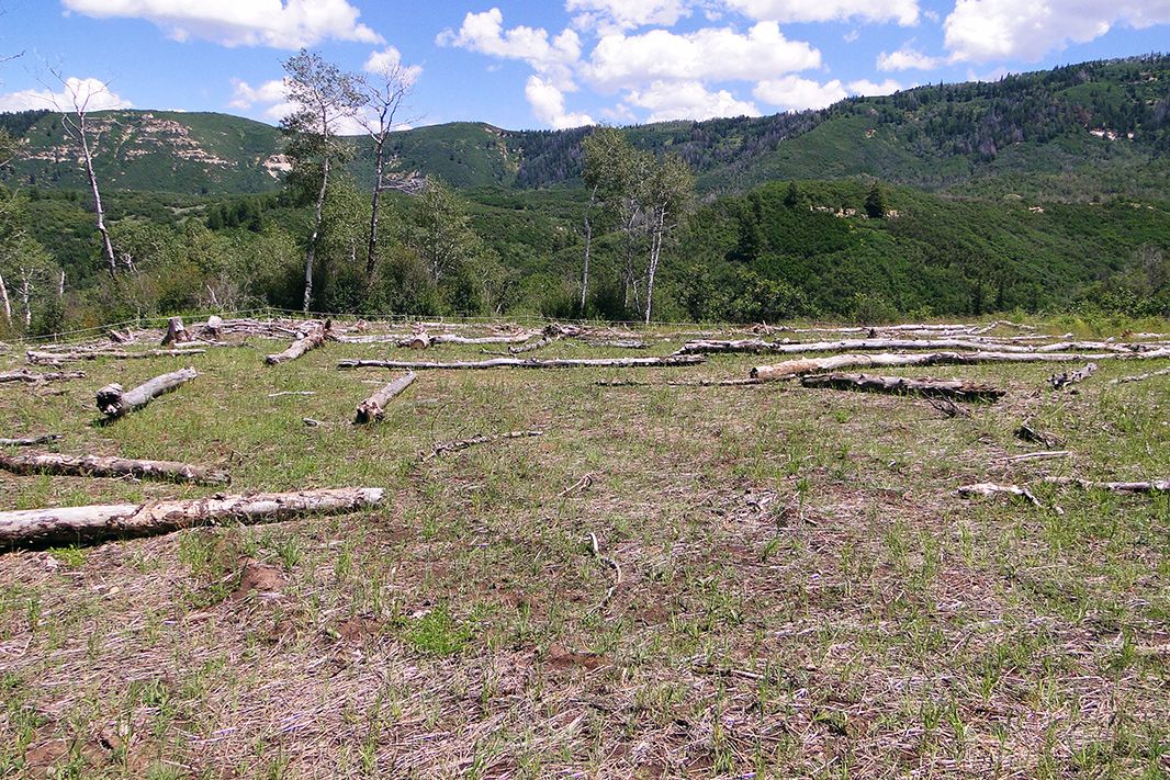 An area of Colorado's North Fork Valley, 'reclaimed' after the forest had been bulldozed and scraped for methane venting well pads.