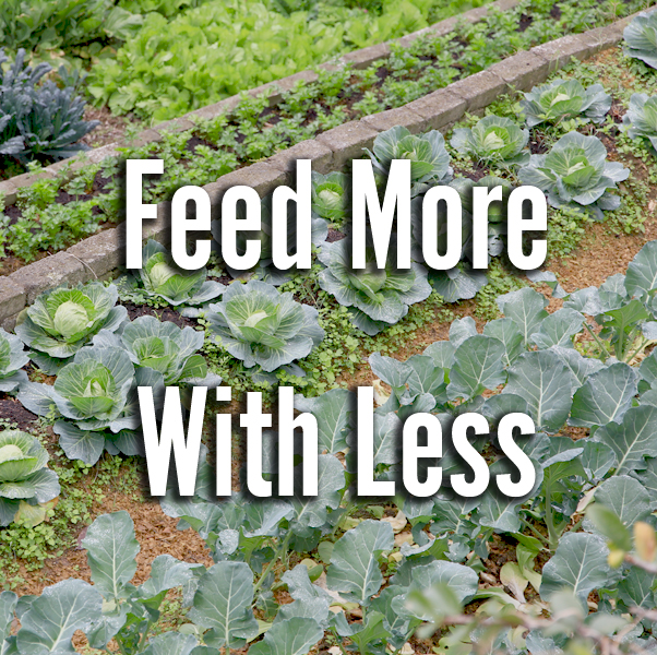Feed more with less