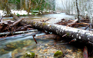 A stream flows under a fallen tree in the wintertime in Gifford Pinchot National Forest in Washington. (Rachel Sandwick / Flickr)