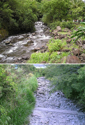 Above: ʻIao Stream flowing naturally above all diversions at the ʻIao Needle State Park. Below: Bone-dry ʻIao Stream, downstream of diversions.