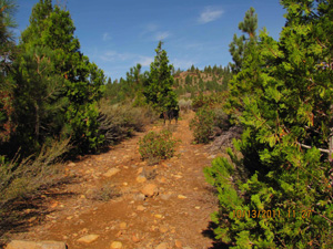 An overgrown, unused, unmaintained Tahoe National Forest system road. (PEER)