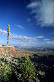 Grand Canyon-Parashant National Monument. (BLM)
