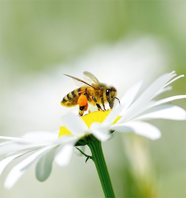 Beekeeping Industry Challenge EPA to Reevaluate Toxic Bee-Killing Pesticide