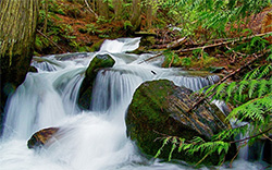 Clear flowing headwaters in the TeePee-Spring Creek roadless area in Montana's Cabinet Mountains. (Terry Glase)