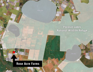 Rose Acre Farms is located adjacent to the Pocosin Lakes National Wildlife Refuge (area shaded in white). Ventilation fans blow contamination over refuge land and water bodies.