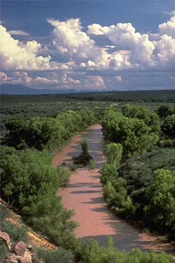 The San Pedro Riparian National Conservation Area. (BLM)