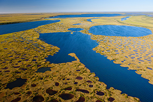 Teshekpuk Lake. Few people expect to see so many wetlands and lakes dotting the Arctic landscape, yet the region is home to countless lakes and some of the most productive wetland systems in the world. These wetlands are near Teshekpuk Lake, a critical area for migrating bird species. (Florian Schulz / visionsofthewild.com)
