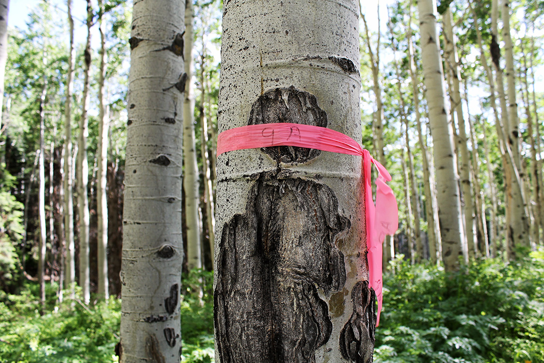 Flagging tape identifies the location of a proposed coal exploration drilling pad. The forest visible in the photo would be bulldozed flat.