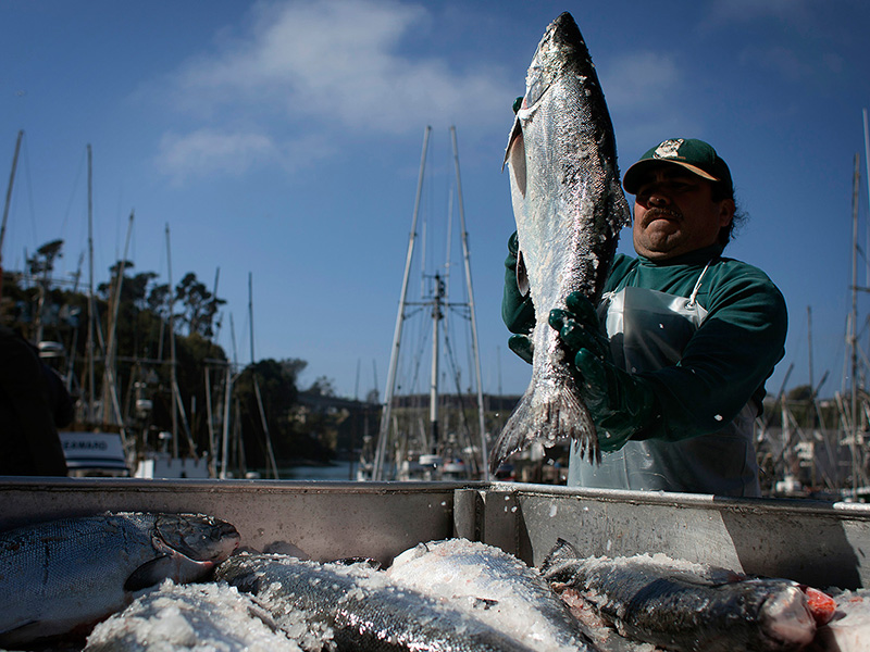 Fisherman Alfredo Acosta sorts fish by weight on the docks in Ft. Bragg, CA.