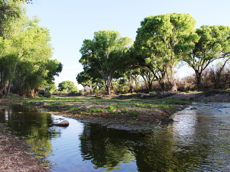 San Pedro Riparian National Conservation Area in Arizona