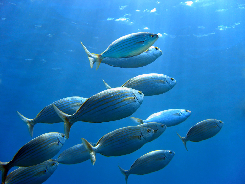 Climate change leaves fish and crabs gasping for breath for Air swimming fish