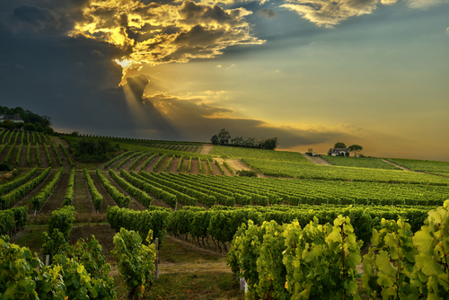 >The sun setting behind dark clouds over vineyards in southern France.