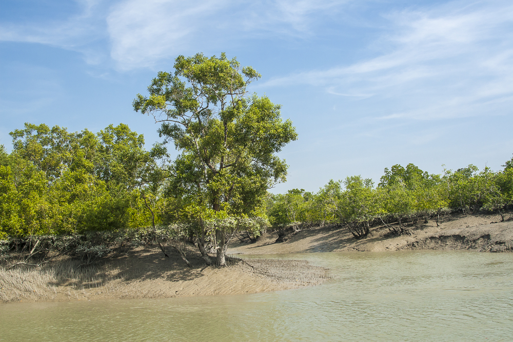 The Sundarbans mangrove forest is one of the largest in the world and lies on the delta of the Ganges, Brahmaputra and Meghna rivers on the Bay of Bengal.