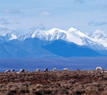 The way of life of the Gwich'in people, who have depended on the caribou of the Arctic Refuge for millennia, is threatened by plans for oil drilling.