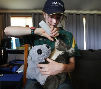 A volunteer feeds a baby koala injured in Australia's catastrophic fires in January 2020.