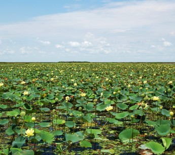 Lake Okeechobee, pictured, is facing another green slime outbreak threatening pelicans, dolphins, fish, manatees and Florida's coasts.