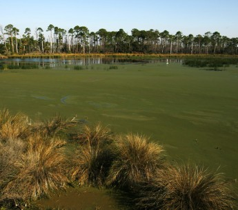 Florida is trying to buy Everglades conservation land from Big Sugar