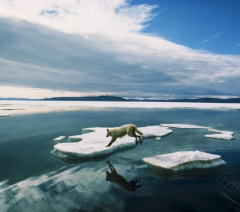 Offshore drilling in the Arctic would disturb an ecosystem unlike any other on Earth, affecting already-threatened wildlife such as polar bears, whales, and walruses. It would also thwart progress on addressing climate change.