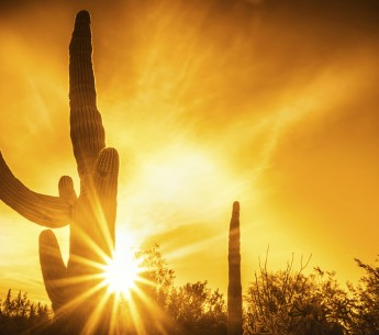Sunset saguaro arizona