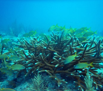The U.S. Army Corps of Engineers will pause a massive dredging project that threatens endangered corals near Florida's Ft. Lauderdale.