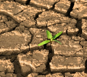 A sprout in dried, cracked earth.