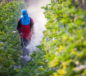 Farmworker using pesticides