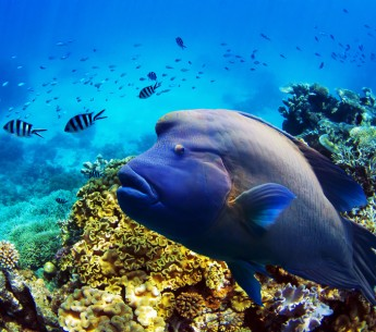 Fish and coral in the Great Barrier Reef