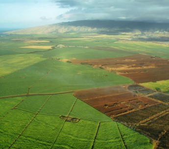 fields in Hawaii