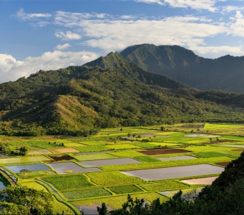 Taro fields on Kauaʻi.