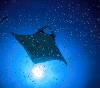 """The United Nations recently adopted an oceans goal for the first time to """"conserve and sustainably use the oceans, seas and marine resources for sustainable development."""""""