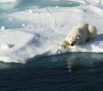 A polar bear rests on the edge of an ice sheet.