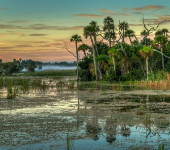 Florida wetlands