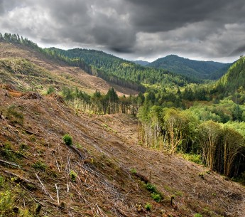 Clear cut logging operations have already devastated forests in Oregon. This bill will allow even larger areas to be razed for timber production without public comment.