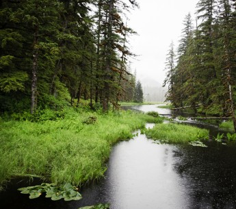 The Tongass National Forest, Alaska