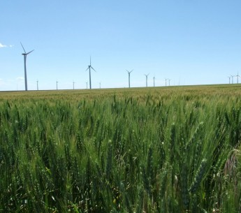Wind turbines in a Kansas wheat field.