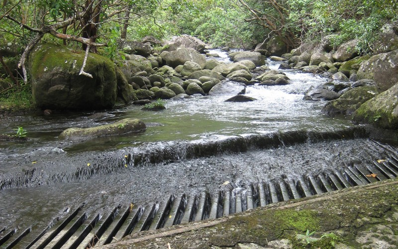 Restoration of Waihe`e River and Waiehu Stream. Upper diversion on Waihe`e River with the entire flow of the river being diverted.
