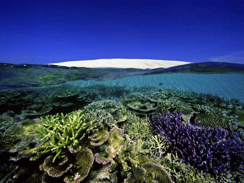 Reef front at Number 6 Sand Cay, Great Barrier Reef, Australia