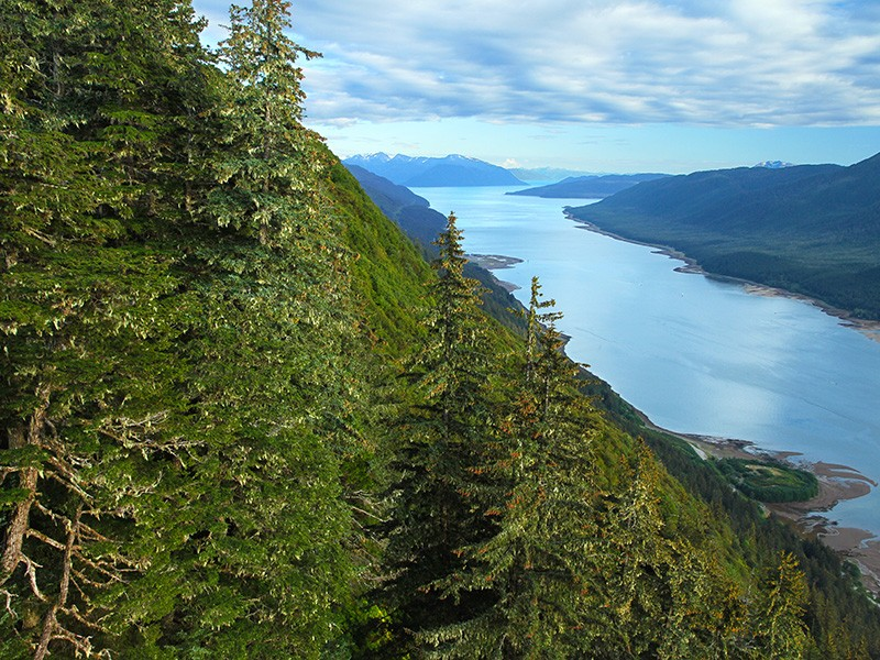 Located in Alaska's panhandle, the Tongass is the country's largest national forest—and home to nearly one-third of all old-growth temperate rainforest remaining in the entire world.