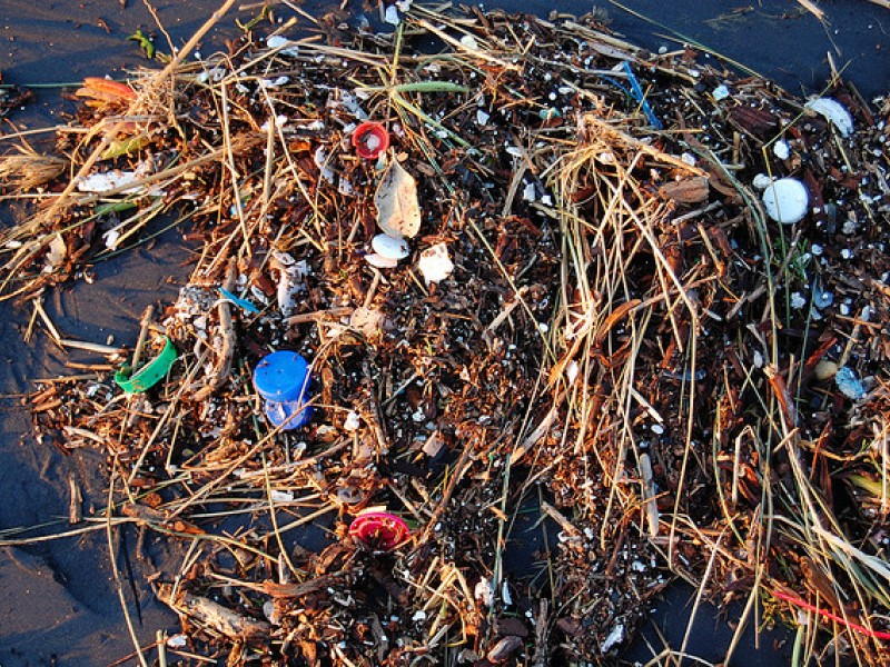 Plastic found in the ocean.