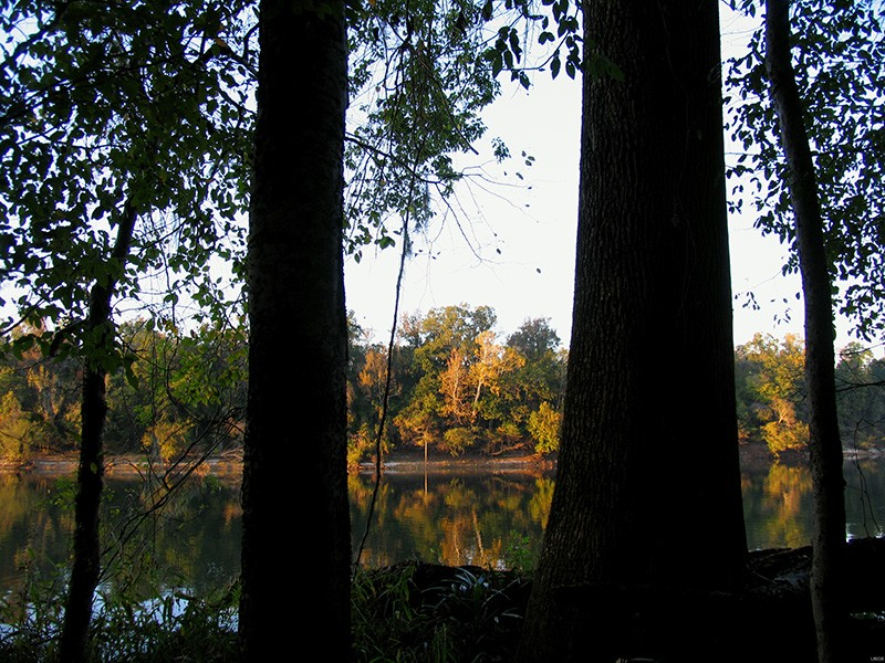 Fall colors along the Apalachicola River.