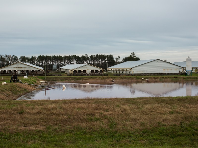 During Hurricane Florence, concentrated animal feeding operations like this one in Warsaw, North Carolina, flooded the surrounding community with hog waste.