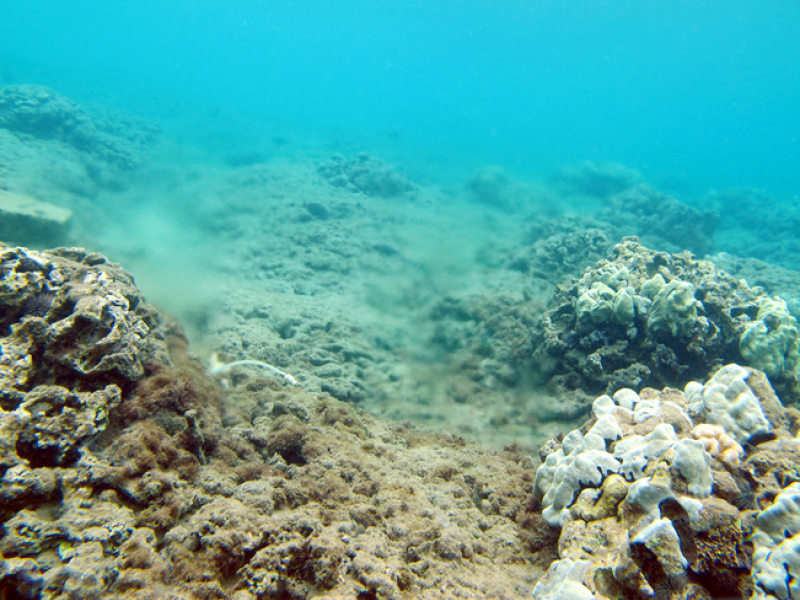 Degraded coral reefs at Kahekili Beach Park, west Maui, Hawai'i.