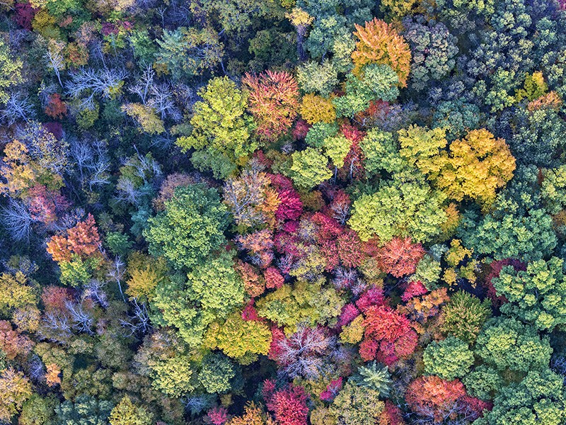 In New York, home to these Autumn trees, a novel state tax reform proposed by Gov. Andrew Cuomo taps into a little-known but powerful climate opportunity — the carbon-soaking power of agricultural and forest land.